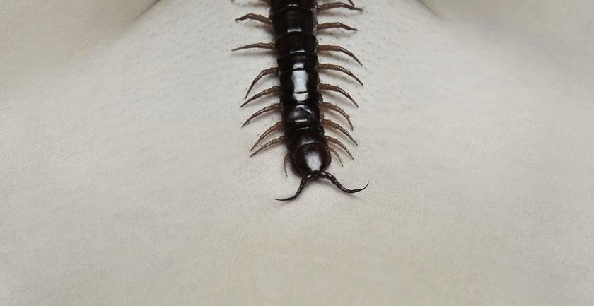 Human Centipede 2 (Full Sequence) - Second poster