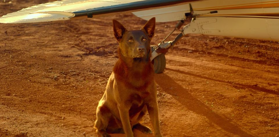 english movie review on red dog Film review: red dog (2011) even the term red dog came about due to the red dirt of the area film review: the lego ninjago movie (2017.
